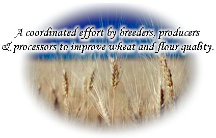 Wheat Quality Council - A coordinated effort by breeders, producers & processors to improve wheat & flour quality.